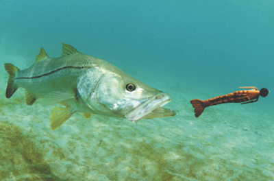 Spring fishing brings big catches and bright smiles to the end of your line