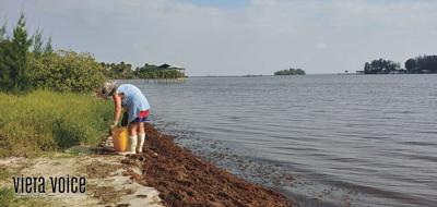 Summer camp teaches about preserving Indian River Lagoon