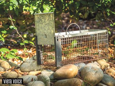 Trapping animals is a long-lived tradition that's still relevant today