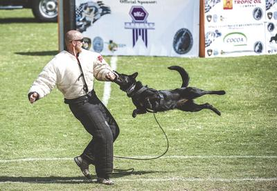 Viera competition will test skills of police K9 teams