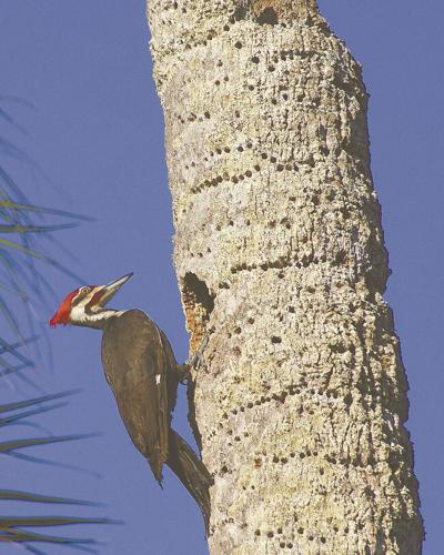 Spinning tales about woodpeckers