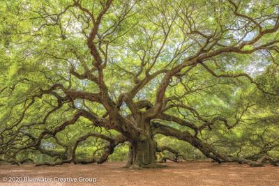 Many traits empower the mighty oak
