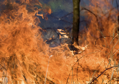 brush fire closes park