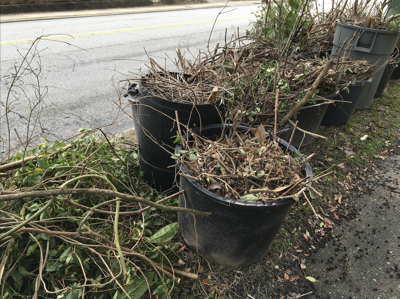 Don't let yard waste go uncollected: A simple phone call is all it takes