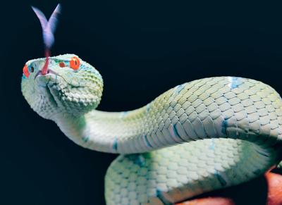 Animal phobias often unwarranted fears