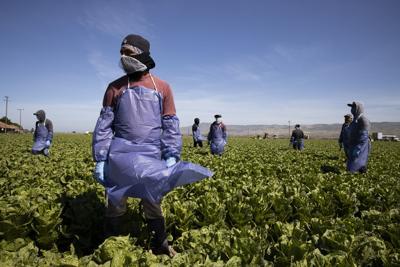 WORLD-NEWS-CORONAVIRUS-FARMWORKERS-3-GET