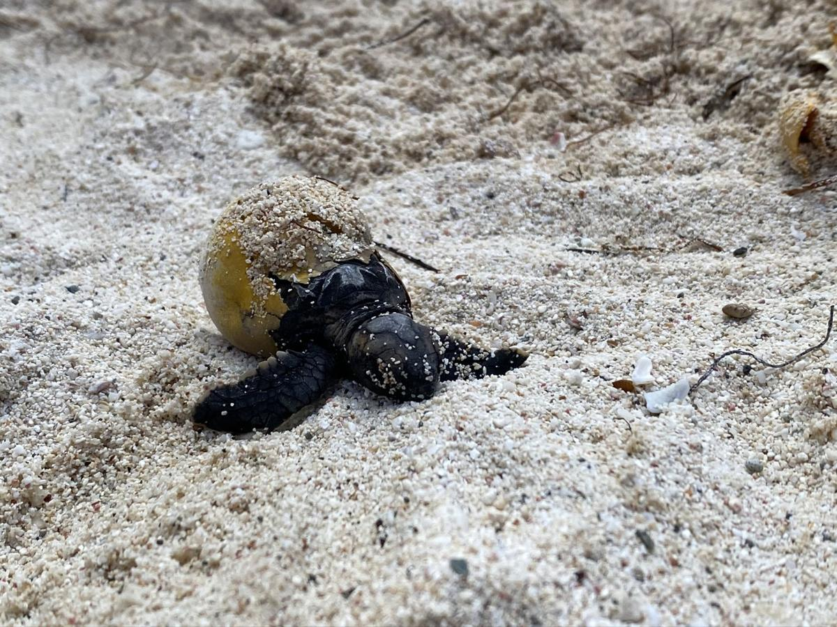 St. John Sea Turtle Monitoring