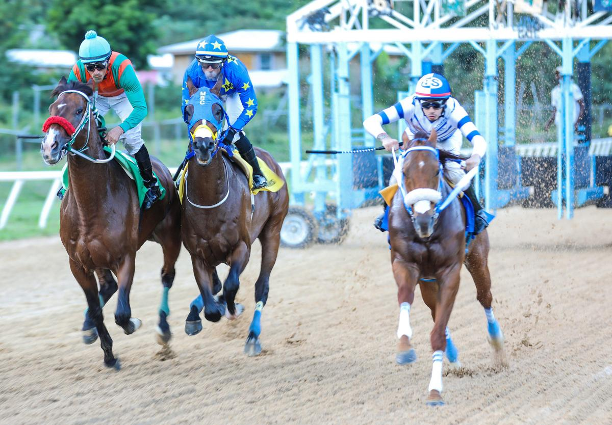 BVI horse races