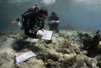 VI Reef Response