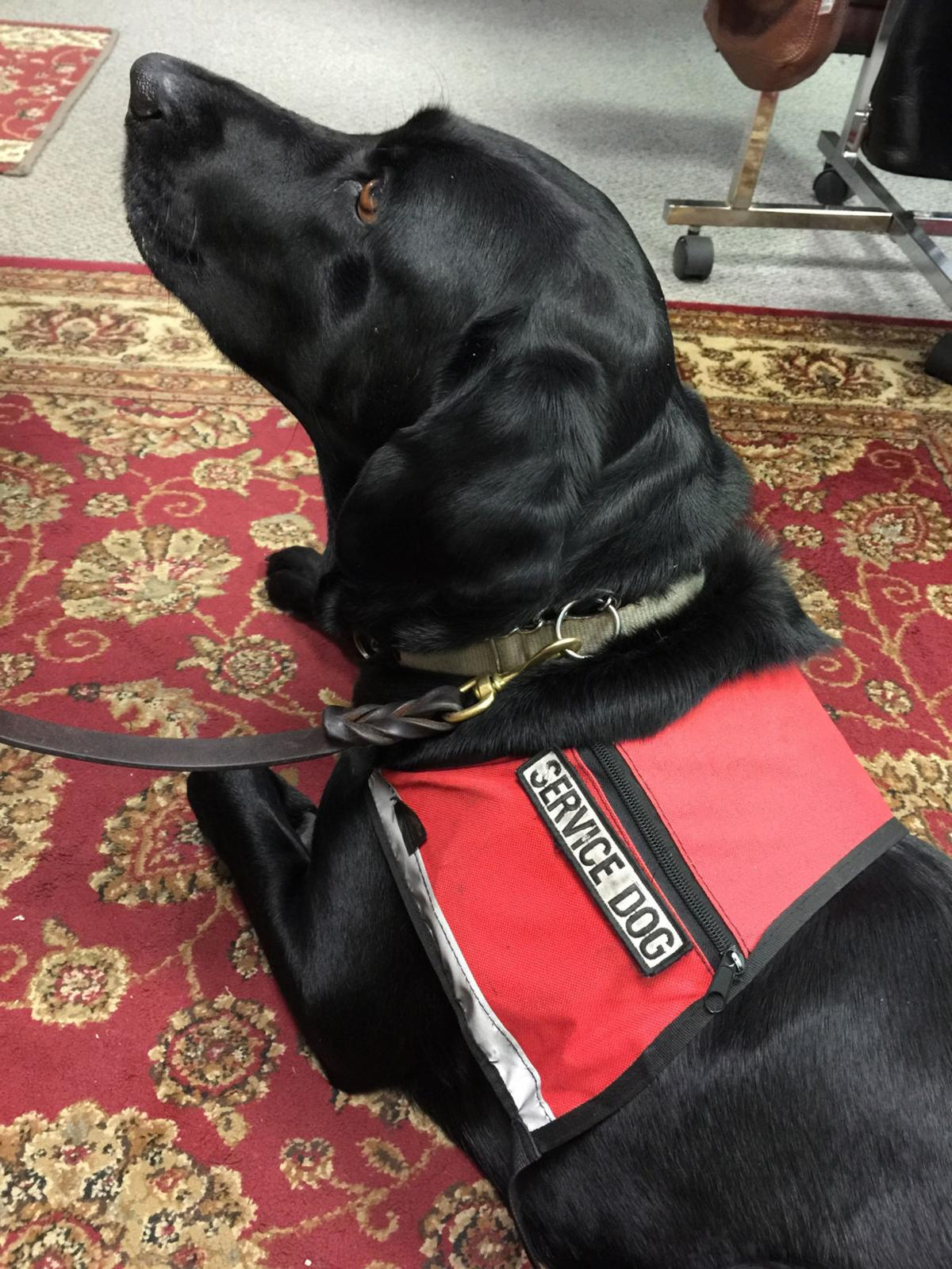 Is that a real service dog print only virginislandsdailynews is that a real service dog 1betcityfo Images