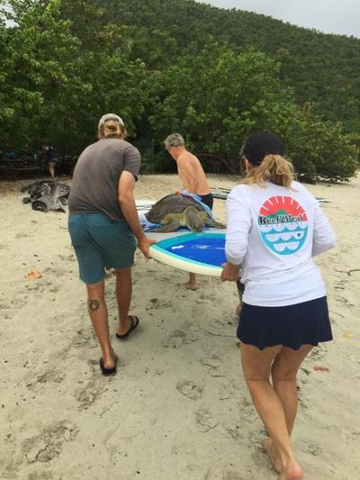 Sad news, and a glimmer of hope from Sea Turtle Program