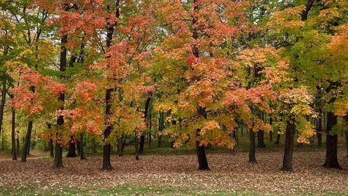 Fall Leaves 2021