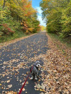 Fall Leaves- along trail