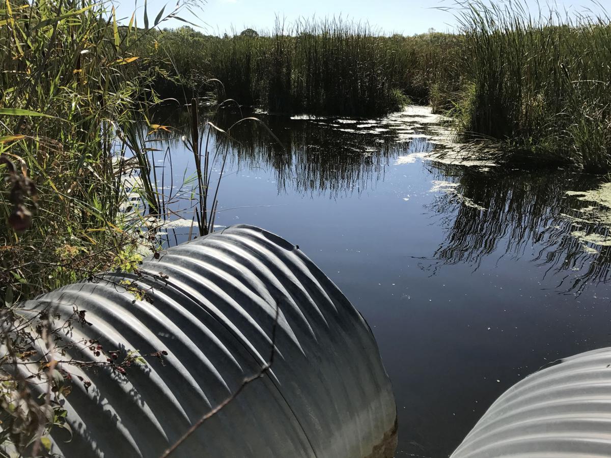 MN DNRs' Lake Ida Aquatic Management Area lies between Douglas County Ditch 23 and Lake Ida