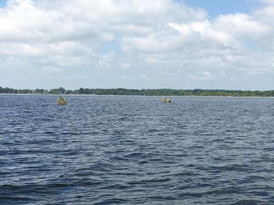 Floating Bogs on Doug. Co. Lakes