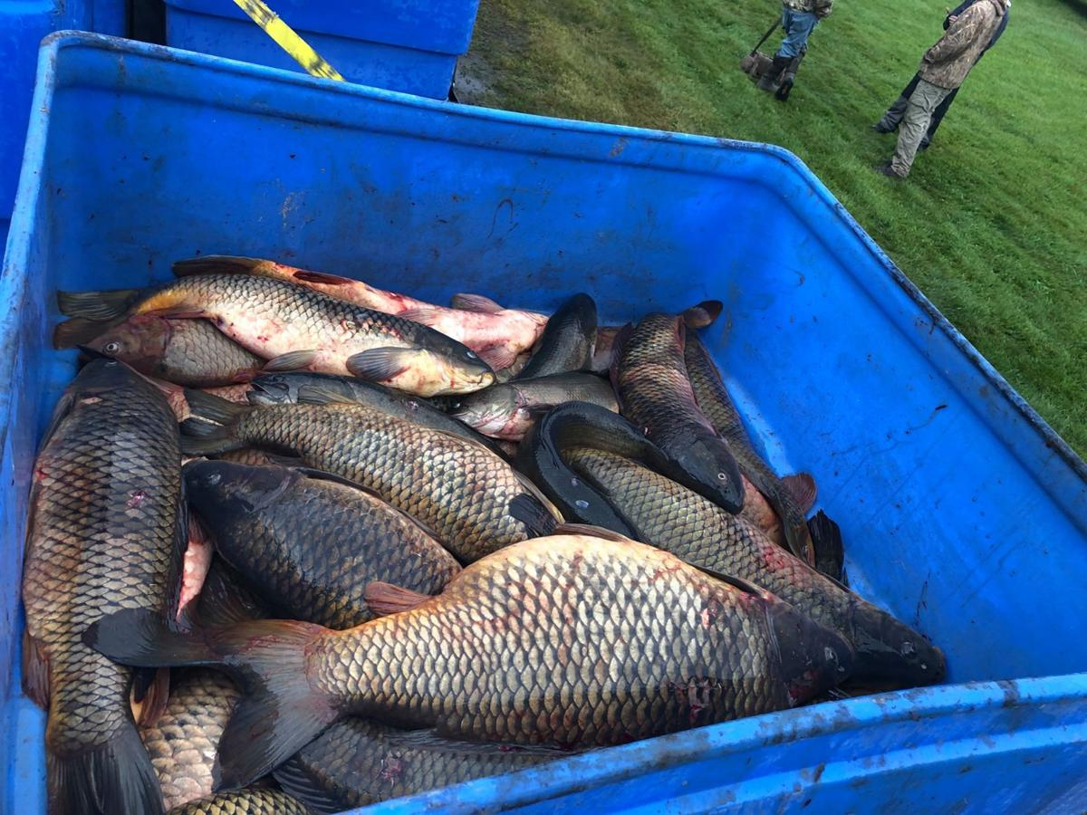 Carp tally adds up in competition