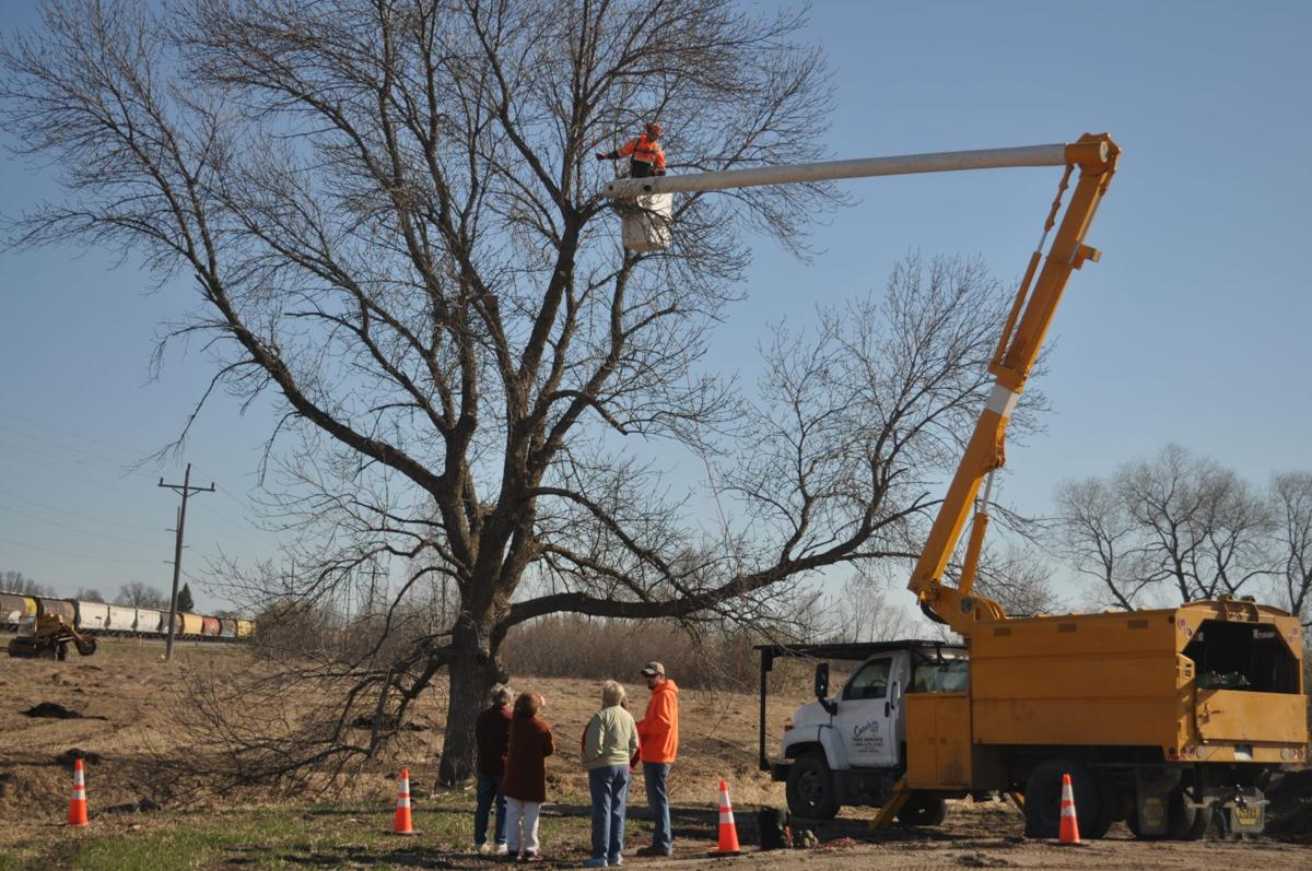 Carr's Tree Service Arbor Day Event