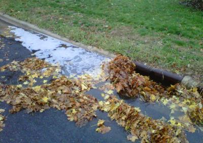 Leaves in Storm Water Drain