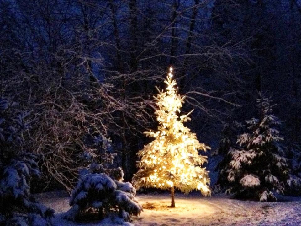 Christmas tree farms anticipate healthy trees, strong sales | Local Business News ...