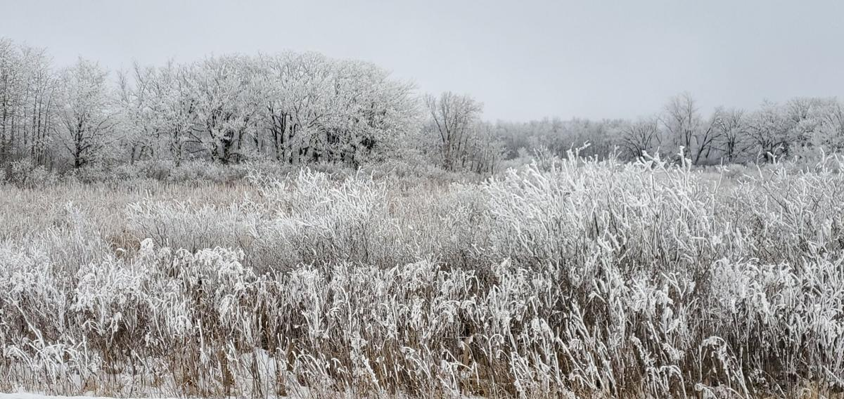 Frost, just off 50th