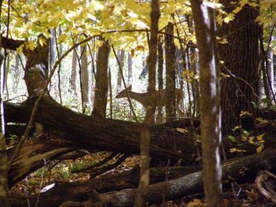 Deer at State Park