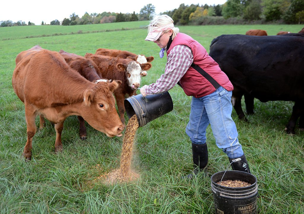 Missouri farmer is up to her elbows in cattle — literally