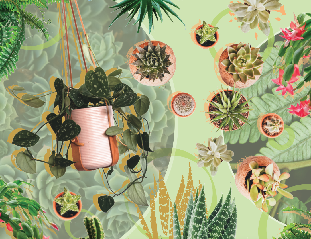 Green Thumb- Feature plant collage