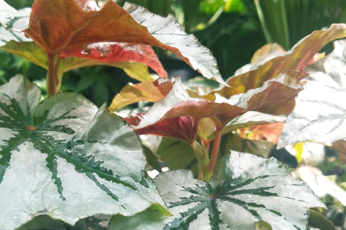 Spruce Up Your Home And Garden With These Fall Plants News