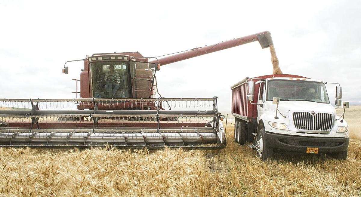 Wheat Harvest grain truck 092519.jpg