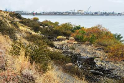 Coal company dumps Morrow Pacific Project