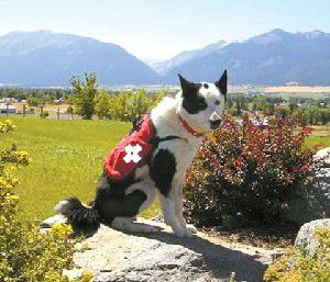 Search dog needs help with medical expenses