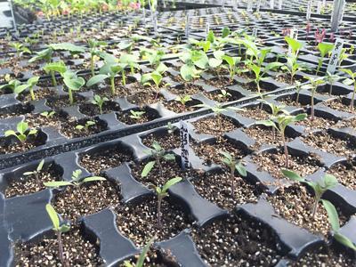seed-starts