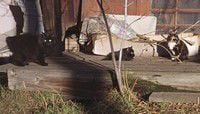 What to do about feral cat problem?