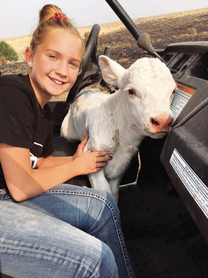 Mollie with calf.jpg