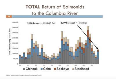 Returns of salmonids Columbia river