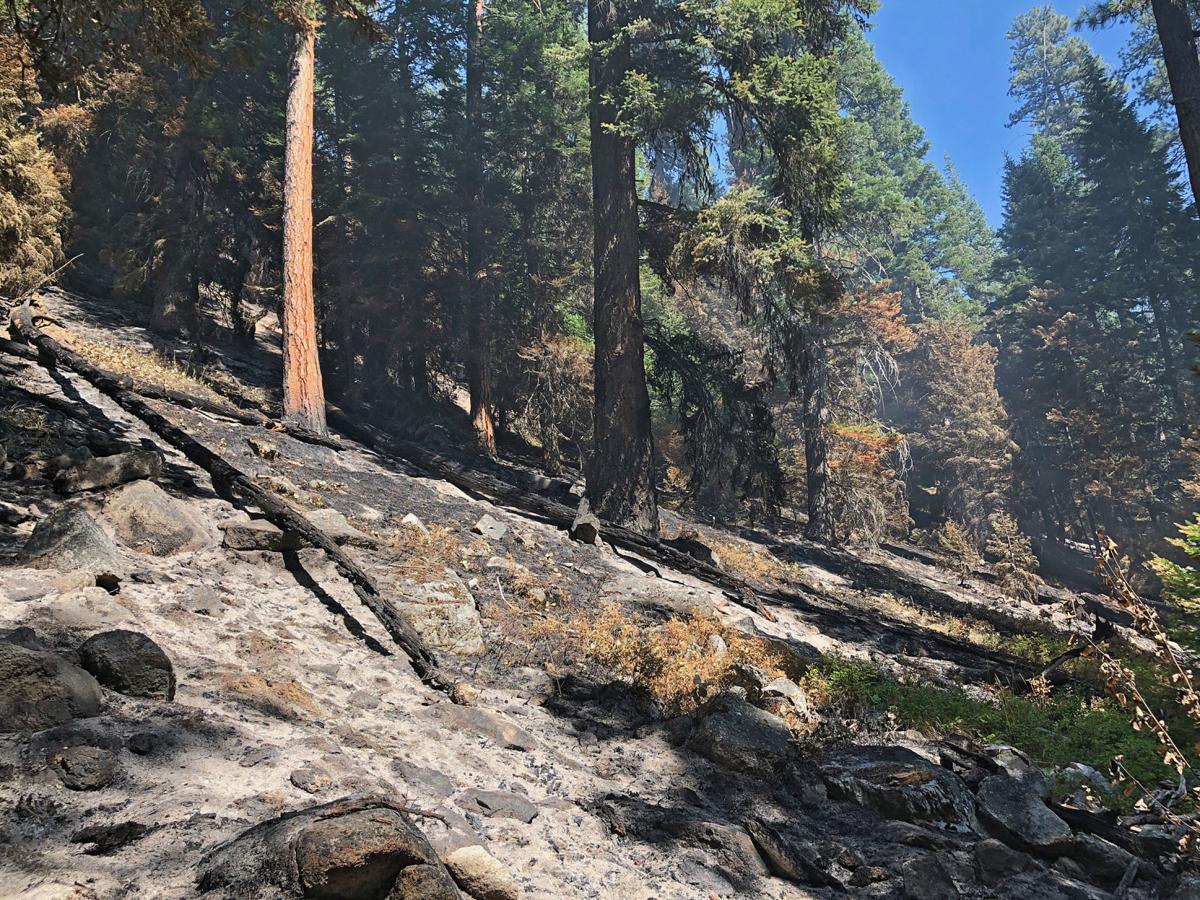 Granite Gulch fire understory burn
