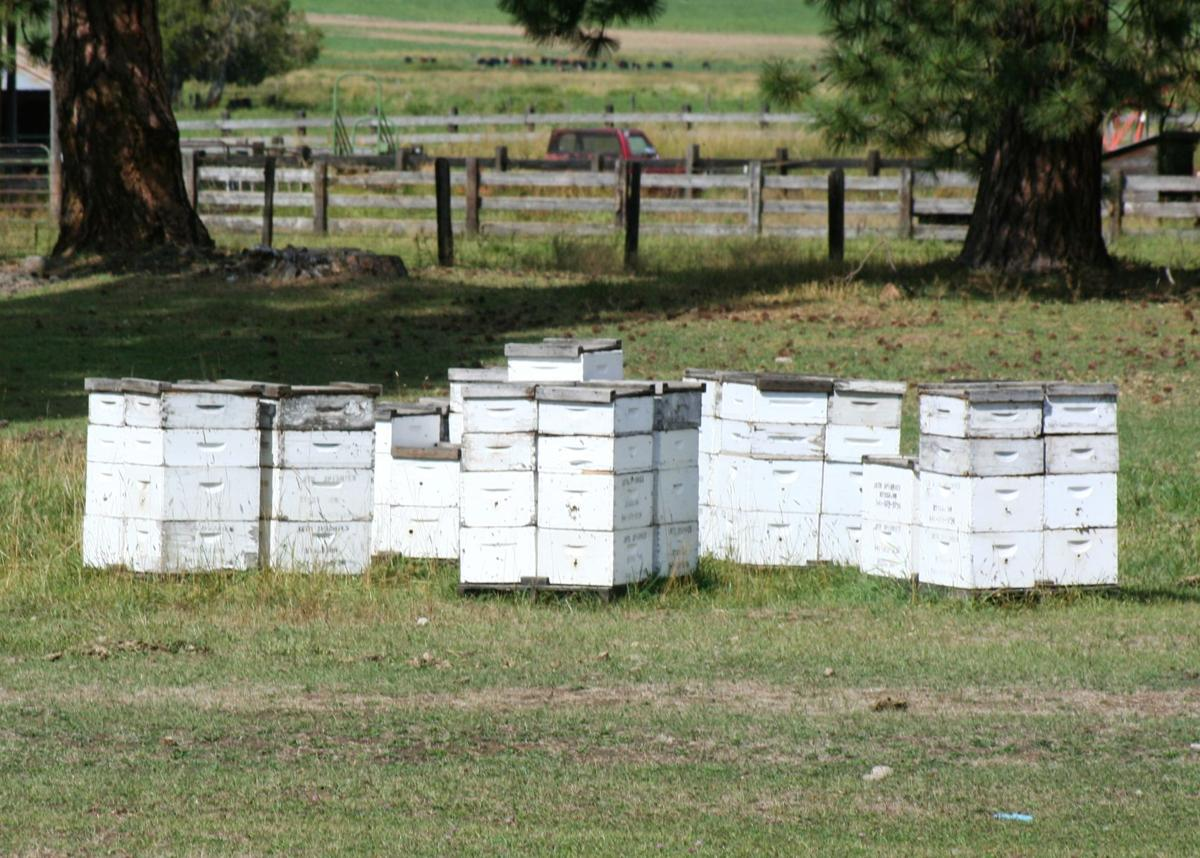 beehives 091119 9338.jpg