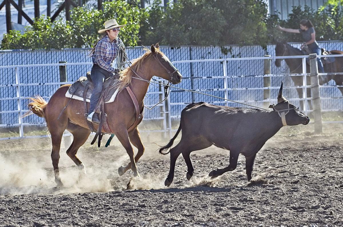 Rodeo Steer stoppedAWP.jpg