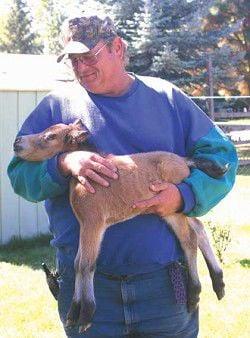 American Miniature foal born in Joseph