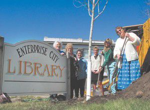 Maple trees planted at Enterprise library