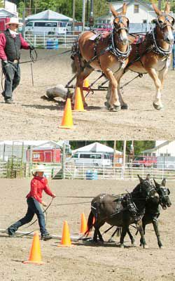 Scenes from 30th Hells Canyon Mule Days