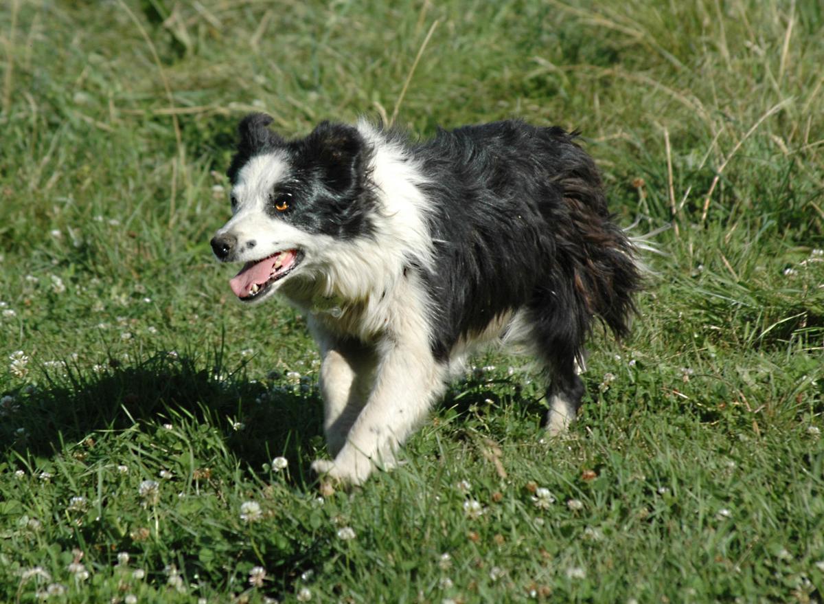 'Allie McClaran' vies for top dog status
