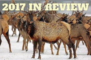 Elk continue to be problem in the county