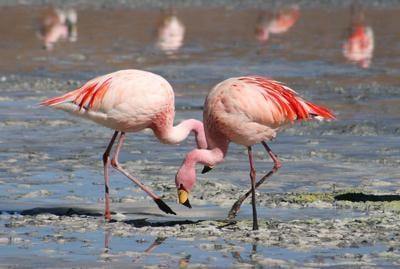 Flamingo buddies