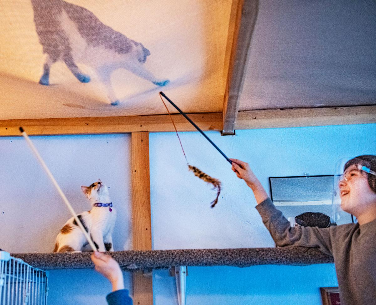 2 Humane Soc cat party 1.jpg