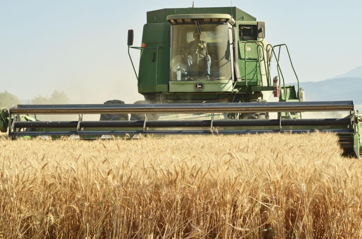 1wheat 2307 for 090920.jpg