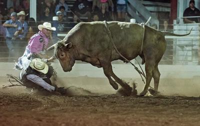 CJD 2019 bulls Humphries