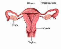 Health Tip of the Week: Some gynecological definitions