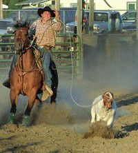 Redneck Rodeo a fun family event