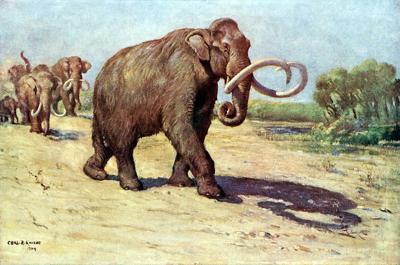 Columbian Mammoth Charles Knight